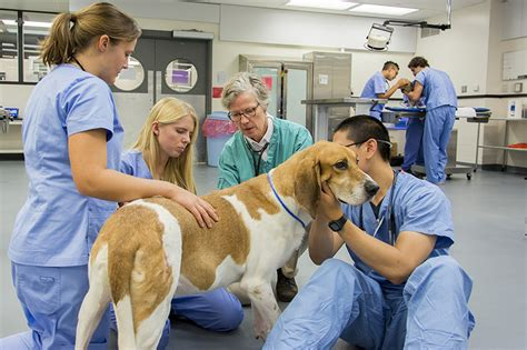 cornell veterinary university college medicine students vet requirements academic preparation education program lab doctor acceptance rate credit educational experience
