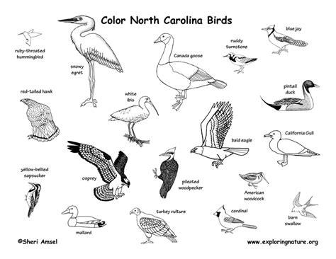 north carolina habitats mammals birds amphibians reptiles