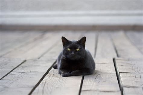 black cats for friday the friday the 13th edition confessions of a