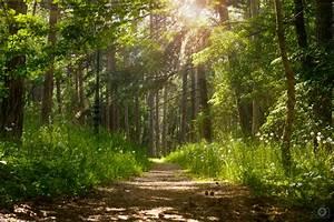 Forest, Sunlight, Background