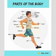 Body Parts Parts Of The Body In English With Pictures  English Expressions  Learn English