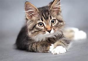 Jouets Pour Chats D Appartement : chat heureux en appartement comment savoir ~ Melissatoandfro.com Idées de Décoration