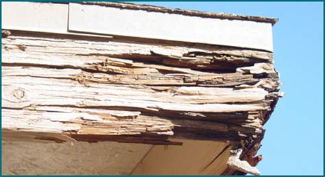 What Is Wood Rot & Dry Rot? Why Does It Matter? Kcnp