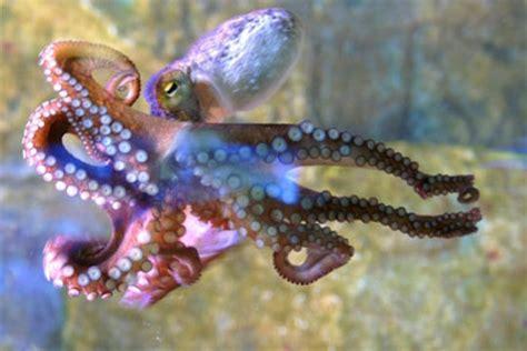 cuisiner tentacules de poulpe la zourite chr journal