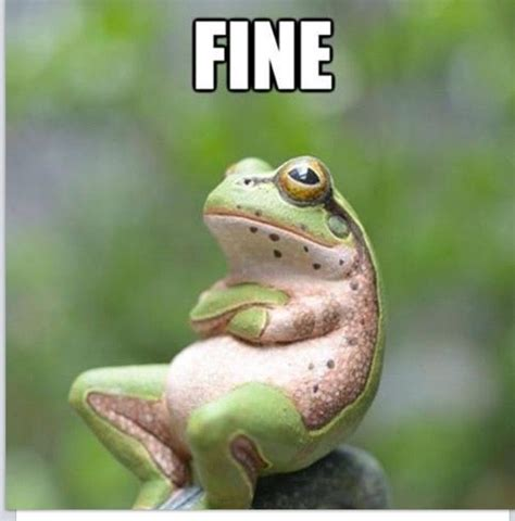 Funny Frog Meme - 17 best images about frogs on pinterest funny friday miss piggy and hip hop