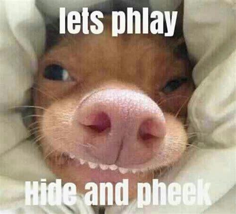 Stephen Dog Meme - phteven dog phteven love dogs pinterest ps chang e 3 and the internet