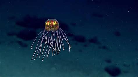 mysterious glowing jellyfish    deep sea