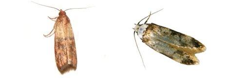 interieur placard cuisine mites textile dégâts possibles sur les tissages