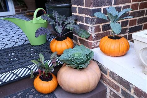 pumpkin planters hgtv