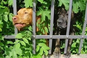 Günstiger Zaun Für Hund : hund bellt st ndig am gartenzaun so gew hnen sie es ihm ab ~ Frokenaadalensverden.com Haus und Dekorationen