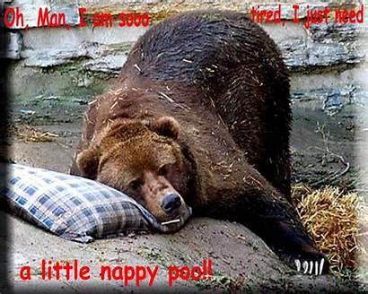 Bear Funny Humor Animal Fanpop