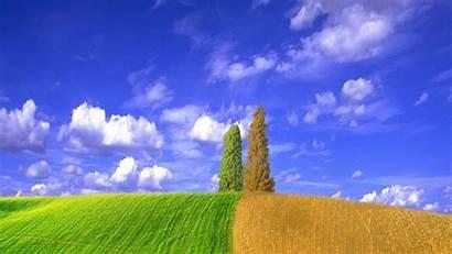 Laptop Nature Wallpapers Fields Wheat July Grass