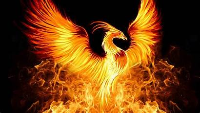 Phoenix Bird Wallpapers Copyrighted Please Found Any