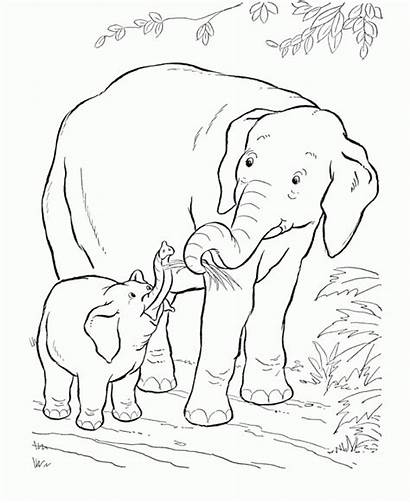 Coloring Elephant African Pages Printable Everfreecoloring