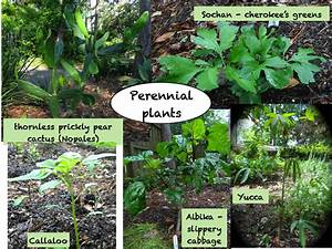 Tallahassee, Permaculture, Guild, Regine, U0026, 39, S, Updated, Perennial, Plant, List