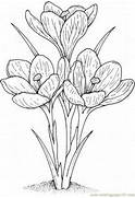 gallery blossom crocus flower coloring page image 23 of 42