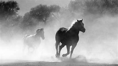 Horse Arabian Horses Desktop 4k Mist