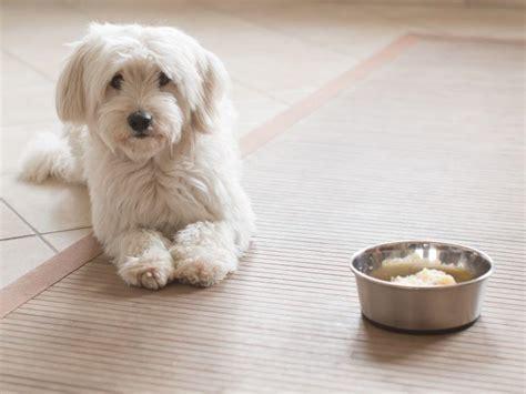 schonkost fuer hunde selber kochen tipps