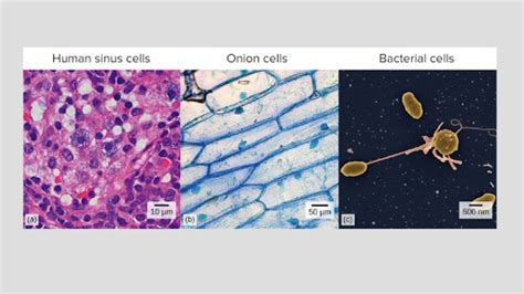 intro  cells article khan academy
