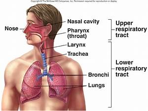 Vocabulary Words  Respiration Image And Definition  Quiz