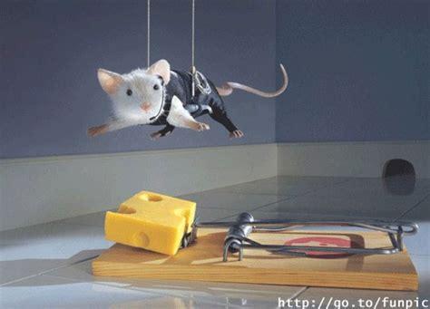 Maus Zu Schnell by Sternschnuppen Maus Gewinnen K 228 Se So Krieg