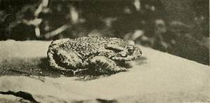 Diagram Of Well Labeled Toad And Frog