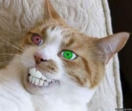 hybrid cats hybrid cat