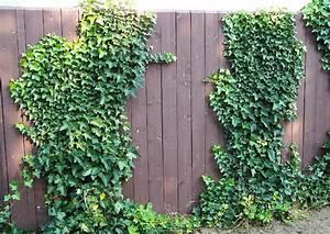Gabionenzaun Mit Hecke : hecke statt zaun natur im quartier lichte hecke statt dichter zaun welcher ist der passende ~ Orissabook.com Haus und Dekorationen