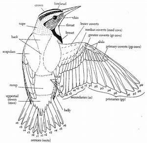 Sophie Wilson    Design Context  Image    Type As Image    Birds    Anatomical Birds