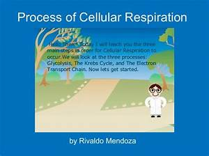 U0026quot Process Of Cellular Respiration U0026quot
