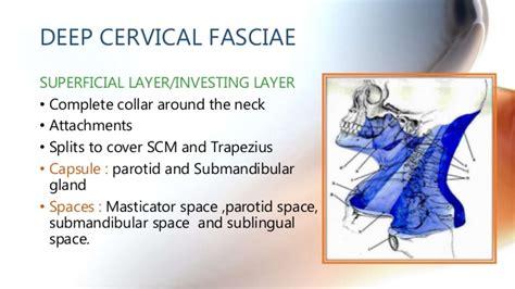 Pharyngeal Mucosal Space