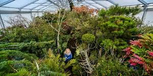Pflanzen Für Gewächshaus : mediterraneum bei k then hier steht eine pension f r exotische pflanzen mitteldeutsche zeitung ~ Whattoseeinmadrid.com Haus und Dekorationen