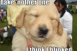 Cute Puppy Pictures with Funny Sayings Quotes