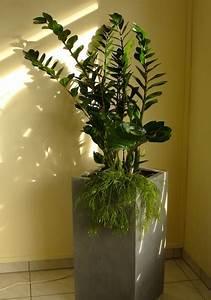 Feng Shui Raumgestaltung : feng shui und die wirkung der pflanzen everyday feng shui ~ Indierocktalk.com Haus und Dekorationen