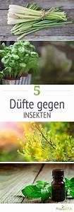 Pflanzen Gegen Wespen : 5 d fte die insekten ganz besonders hassen dies und das pinterest limpieza ~ Orissabook.com Haus und Dekorationen