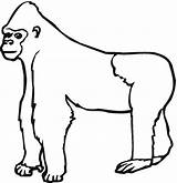 Gorilla Coloring Ape Clipart Animals Colouring Printable Apes Cliparts Outline Preschool Library Animal Silverback Mammals Clipartion Clip Drawing Sheets Monkey sketch template