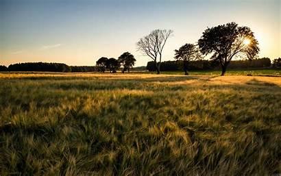 Barley Field Desktop Nature Inch Wallpapers Macbook