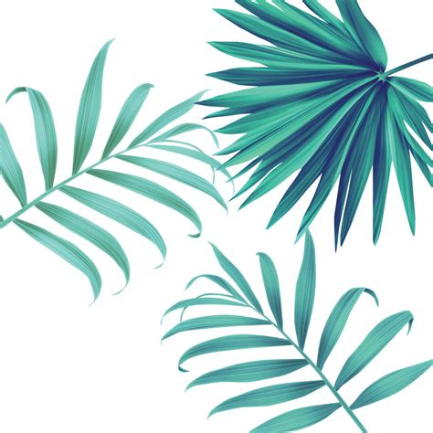 3 Tropical Leaves - Feelin' it Decals