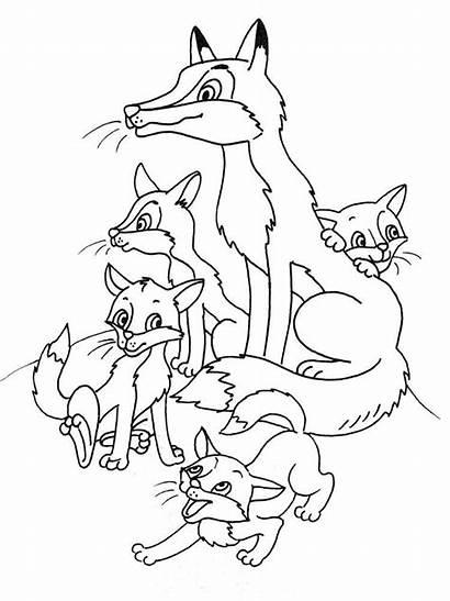 Fox Coloring Raposa Desenho Printable Fuchs Uma