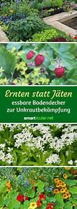 Pflanzen Die Kein Licht Brauchen : die 25 besten ideen zu bodendecker auf pinterest ~ Lizthompson.info Haus und Dekorationen