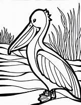 Coloring Bird Pages Pelican Colouring Birds Animal Cocito Leis Colorful Craft Coloringnow sketch template
