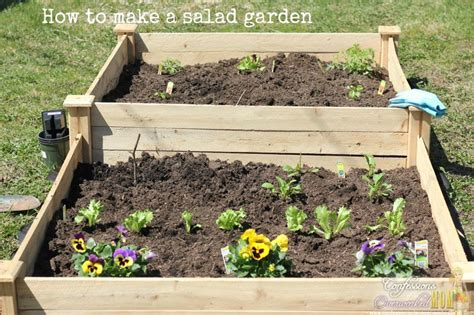 how to make garden how to make a salad garden for fresh spring greens