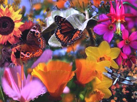 farfalle e fiori condividi la foto fiori e farfalle dall album foto profilo