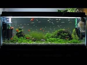 900 aquarium basalt moss Zebra danio Red platy Neon
