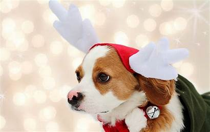 Christmas Dog Mashababko Wallpapers Desktop Pets