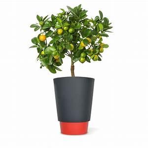 Pot De Fleur Rouge : pot de fleur 50 l gris et rouge ~ Melissatoandfro.com Idées de Décoration