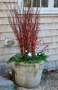 Winter Container Gardens With Dogwood And wallmydecor