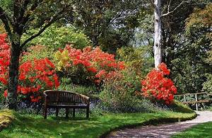 Wann Blüht Der Rhododendron : g rten in schottland ~ Eleganceandgraceweddings.com Haus und Dekorationen