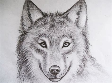 cool drawings  animals pencil art drawing
