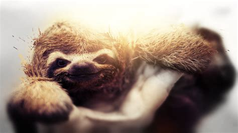 Sloth Wallpaper 72 Images